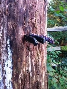 Our knives in a tree